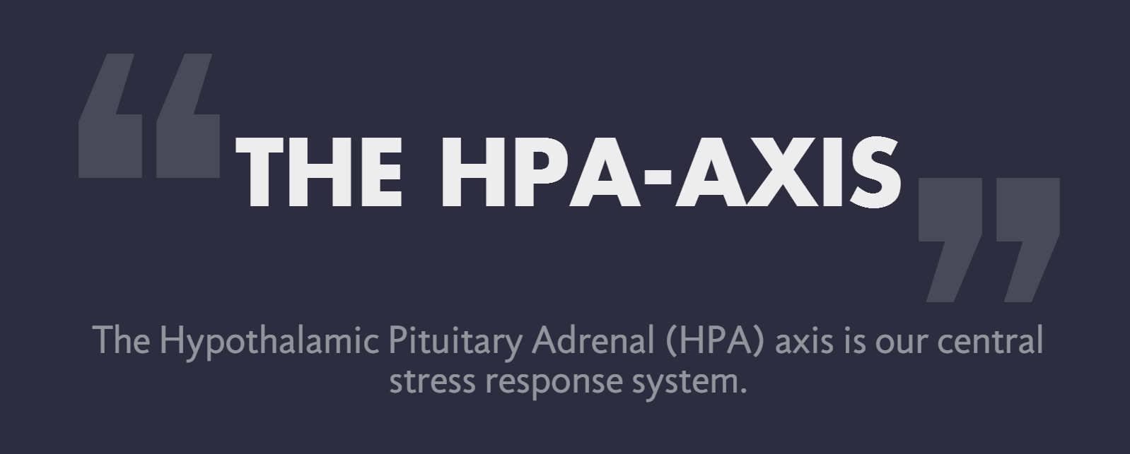 hpa-axis, hypothalamus, hypothalamus function, what is hypothalamus, pituitary gland, pituitary gland function, adrenal glands, adrenal gland function, stressors, The HPA-Axis and Stress, Hypothalamic Pituitary Adrenal Axis, Flow State, neurochemicals of flow state, excess cortisol