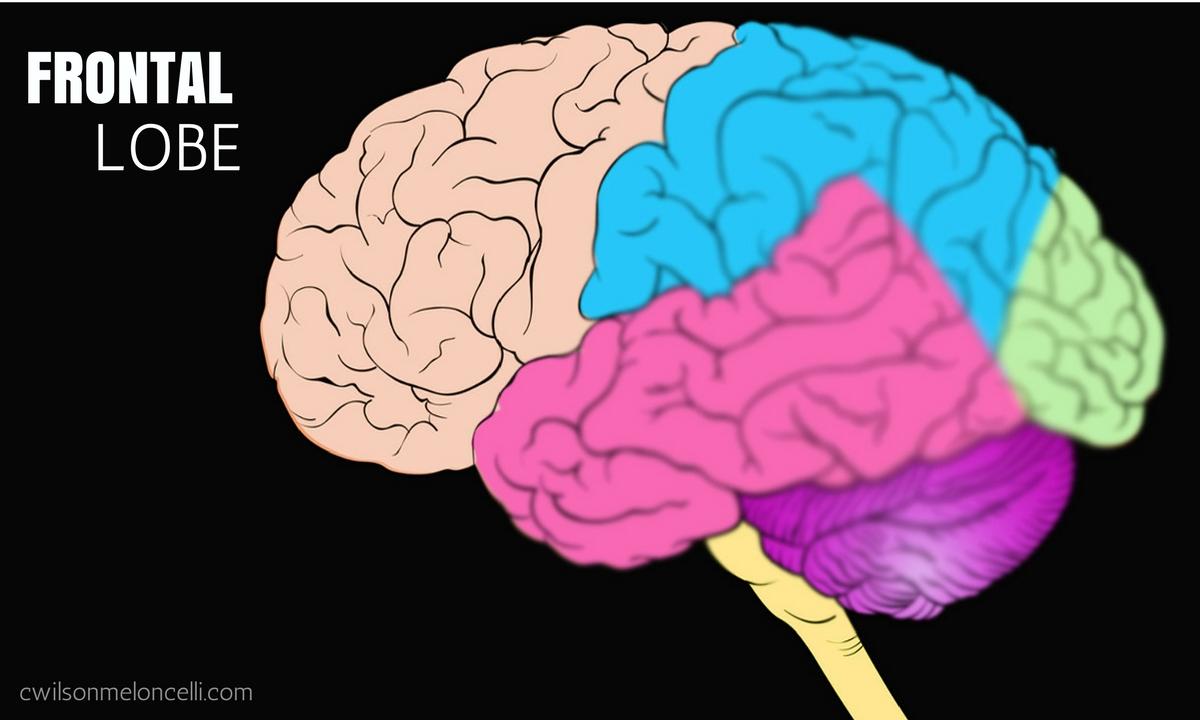 EEG Neurofeedback, Neuroscience Flow State, Flow State, Lobes of Brain, brain waves, flow state brain waves, EEG Flow State, frontal lobe