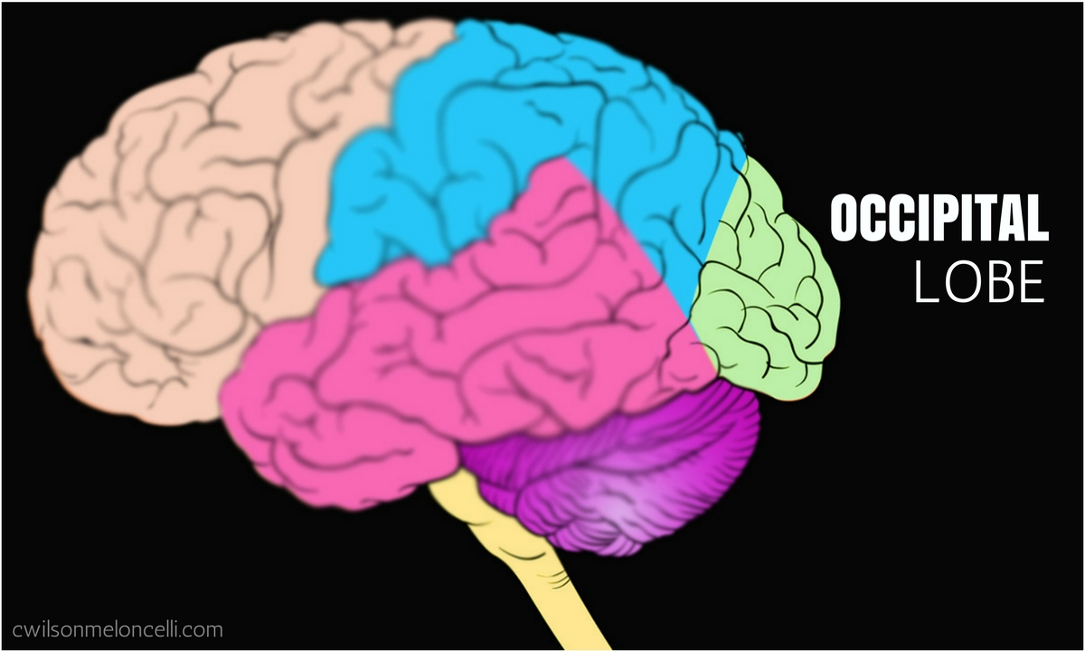 EEG Neurofeedback, Neuroscience Flow State, Flow State, Lobes of Brain, brain waves, flow state brain waves, EEG Flow State, occipital lobe