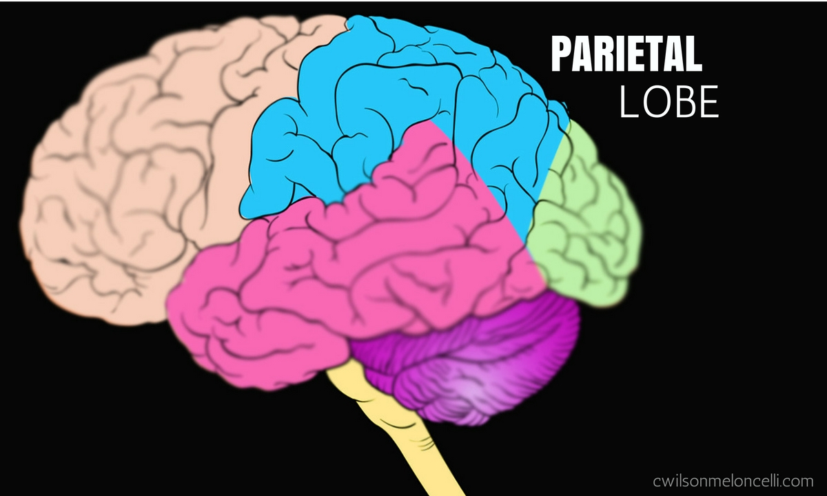 EEG Neurofeedback, Neuroscience Flow State, Flow State, Lobes of Brain, brain waves, flow state brain waves, EEG Flow State, parietal lobe