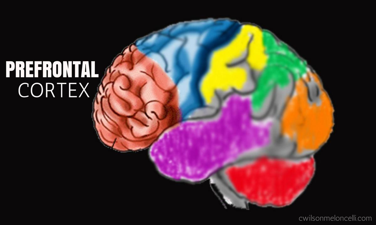 EEG Neurofeedback, Neuroscience Flow State, Flow State, Lobes of Brain, brain waves, flow state brain waves, EEG Flow State, Prefrontal cortex