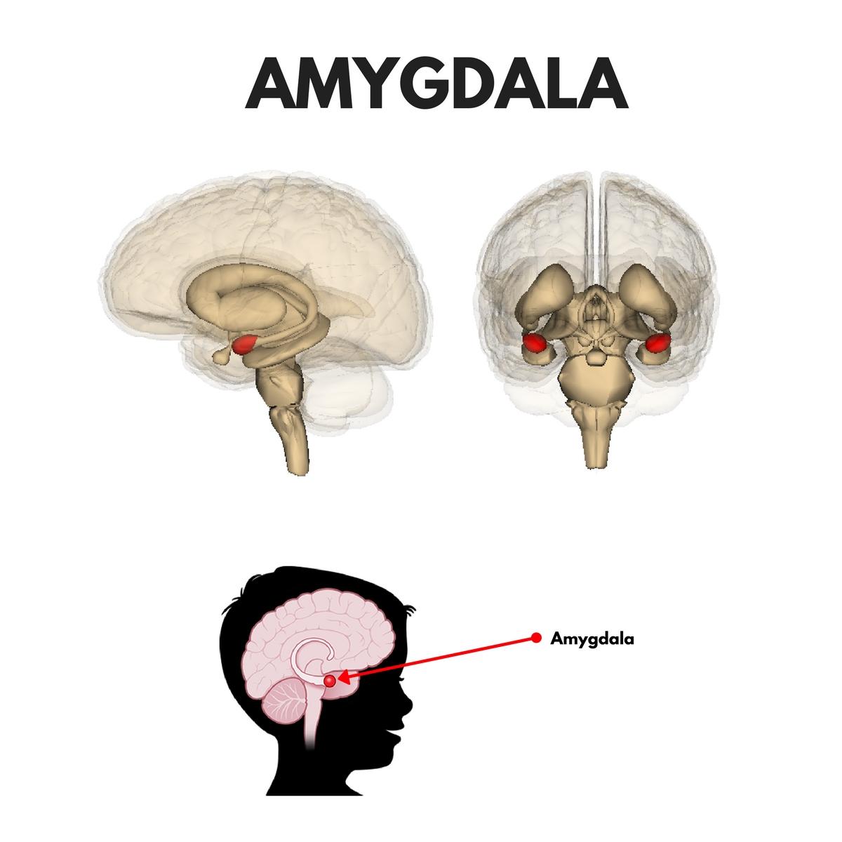 amygdala, flow state, transient hypofrontality